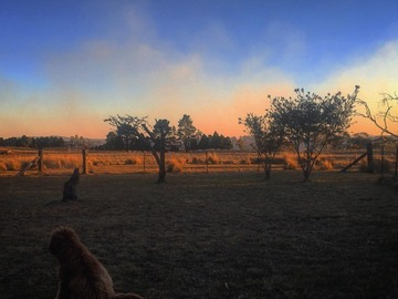 Renting out with online payment: Spectacular outback country Bush view