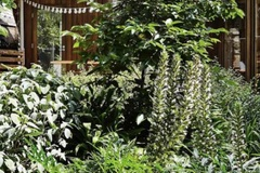 Renting out with online payment: Lush courtyard garden