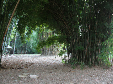 Renting out with online payment: Enchanting Bamboo Grove